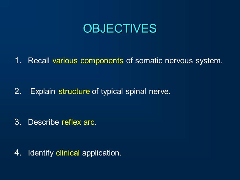 Organization of Somatic Nervous system Spinal nerve and Reflex arc Dr. Qazi Imtiaz Rasool