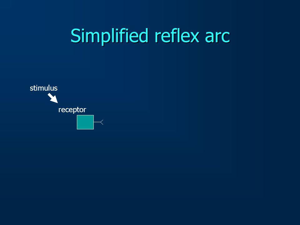 Simplified reflex arc stimulus