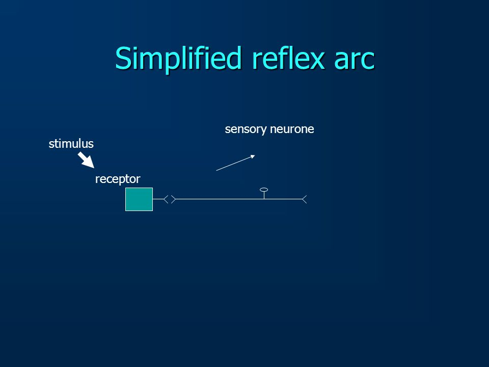 receptor Simplified reflex arc