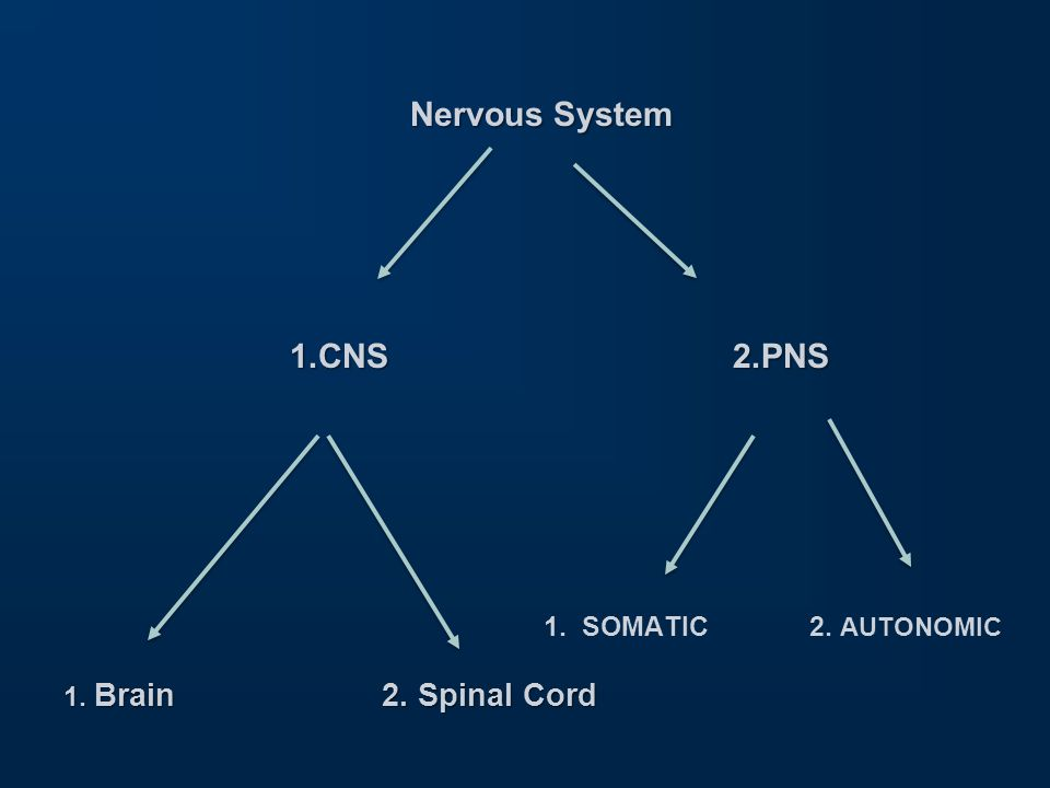 OBJECTIVES 1.Recall various components of somatic nervous system.