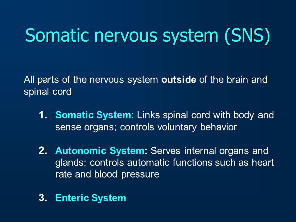 Nervous System Nervous System 1.CNS 2.PNS 1.CNS 2.PNS 1. SOMATIC 2. AUTONOMIC 1. Brain 2. Spinal Cord