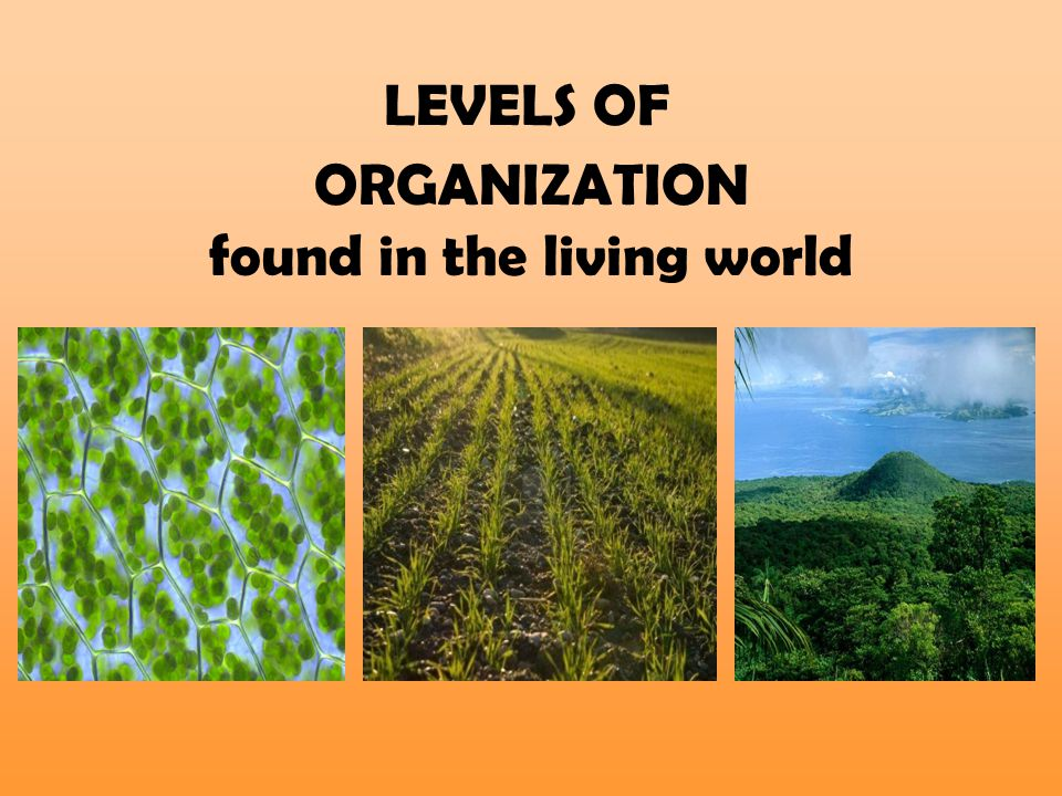LEVELS OF ORGANIZATION found in the living world