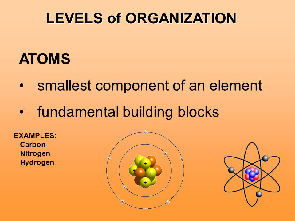 LEVELS of ORGANIZATION ATOMS smallest component of an element fundamental building blocks EXAMPLES: Carbon Nitrogen Hydrogen