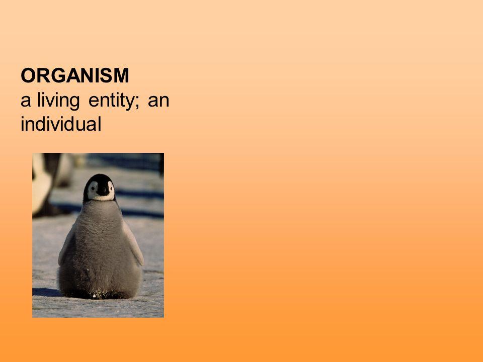 ORGANISM a living entity; an individual