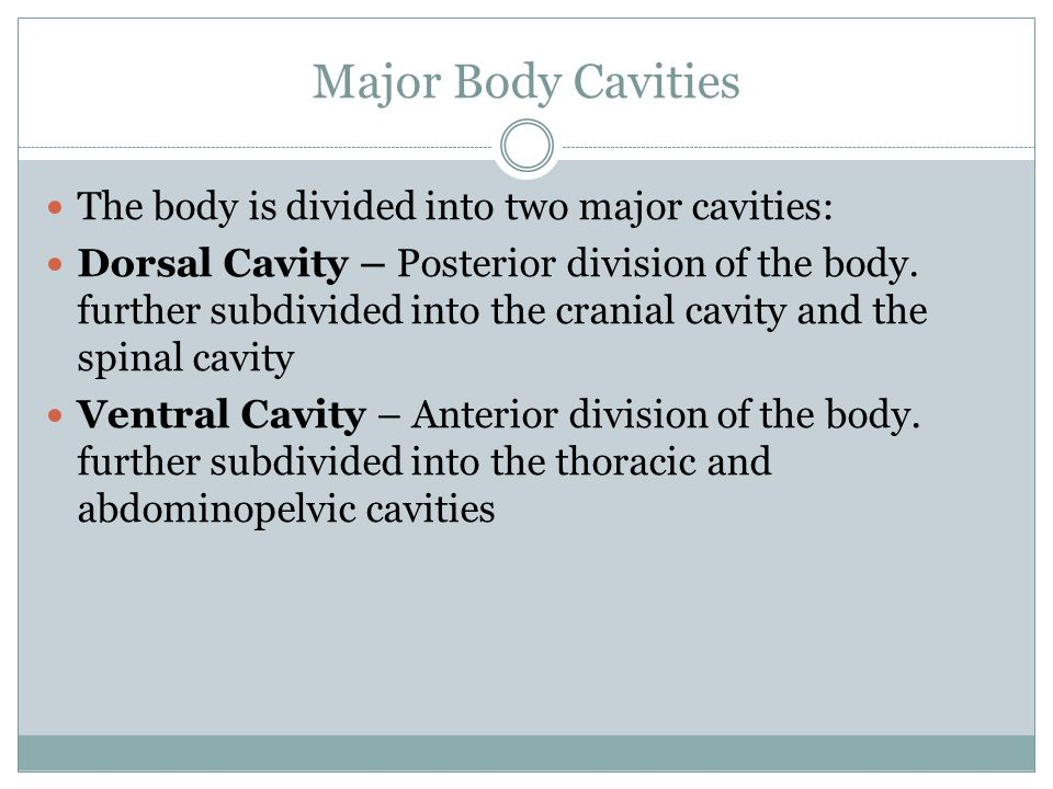 Major Body Cavities The body is divided into two major cavities: Dorsal Cavity – Posterior division of the body.