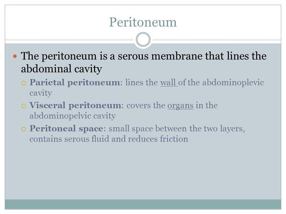 Peritoneum The peritoneum is a serous membrane that lines the abdominal cavity  Parietal peritoneum: lines the wall of the abdominoplevic cavity  Vi