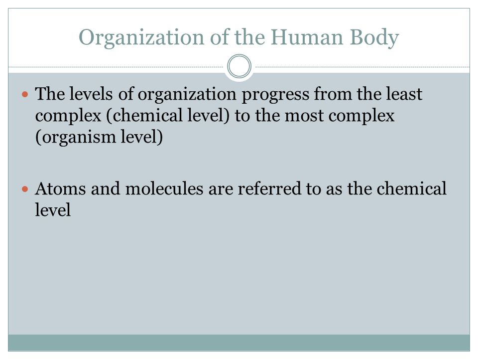 Organization of the Human Body The levels of organization progress from the least complex (chemical level) to the most complex (organism level) Atoms and molecules are referred to as the chemical level