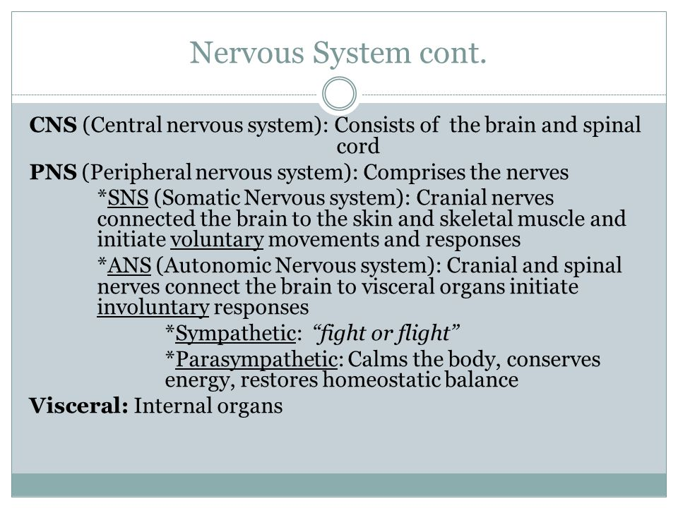 Nervous System cont. CNS (Central nervous system): Consists of the brain and spinal cord PNS (Peripheral nervous system): Comprises the nerves *SNS (S