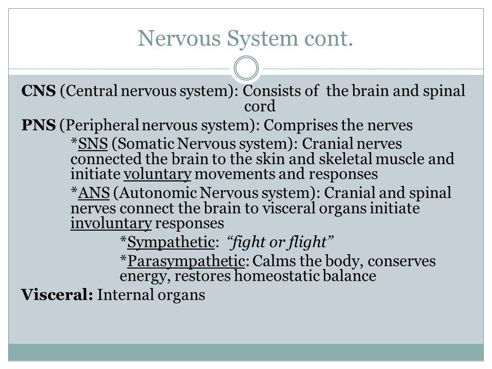 Nervous System cont.
