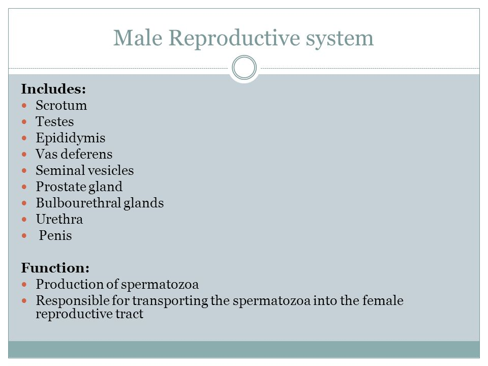 Male Reproductive system Includes: Scrotum Testes Epididymis Vas deferens Seminal vesicles Prostate gland Bulbourethral glands Urethra Penis Function: Production of spermatozoa Responsible for transporting the spermatozoa into the female reproductive tract