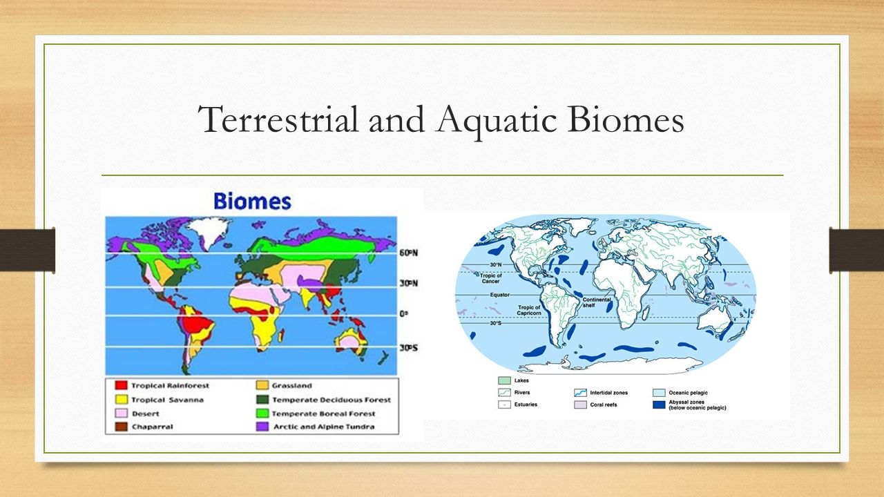 Terrestrial and Aquatic Biomes