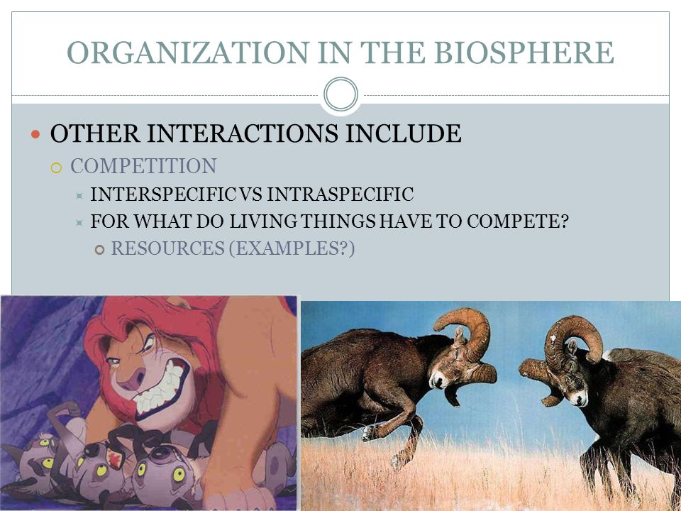 ORGANIZATION IN THE BIOSPHERE OTHER INTERACTIONS INCLUDE  COMPETITION  INTERSPECIFIC VS INTRASPECIFIC  FOR WHAT DO LIVING THINGS HAVE TO COMPETE.