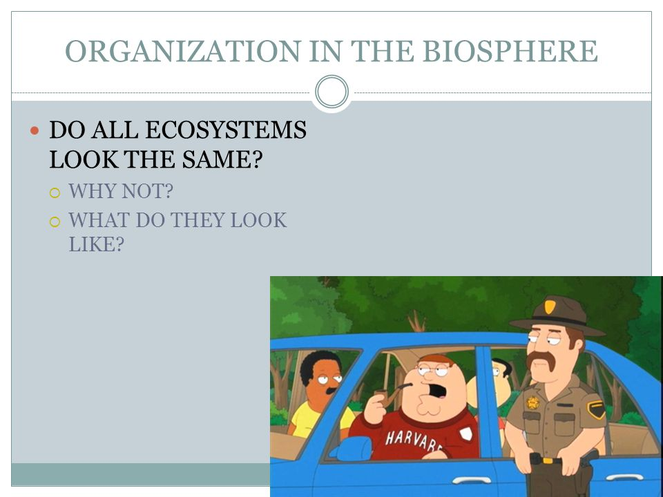 ORGANIZATION IN THE BIOSPHERE DO ALL ECOSYSTEMS LOOK THE SAME  WHY NOT  WHAT DO THEY LOOK LIKE