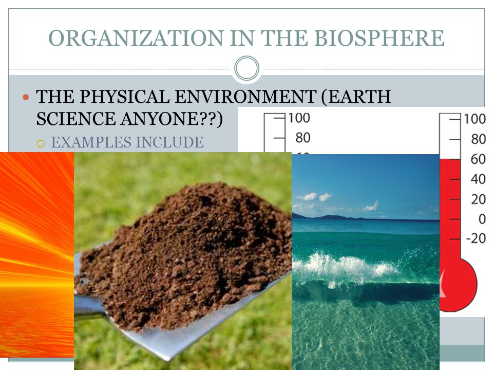 ORGANIZATION IN THE BIOSPHERE THE PHYSICAL ENVIRONMENT (EARTH SCIENCE ANYONE )  EXAMPLES INCLUDE