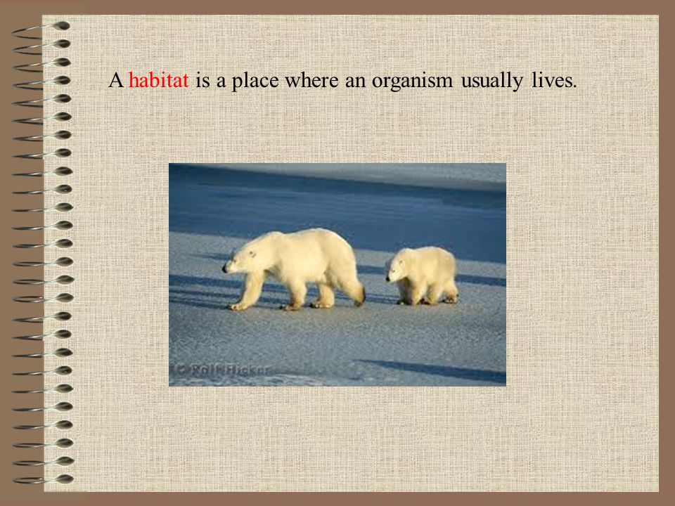 A habitat is a place where an organism usually lives.