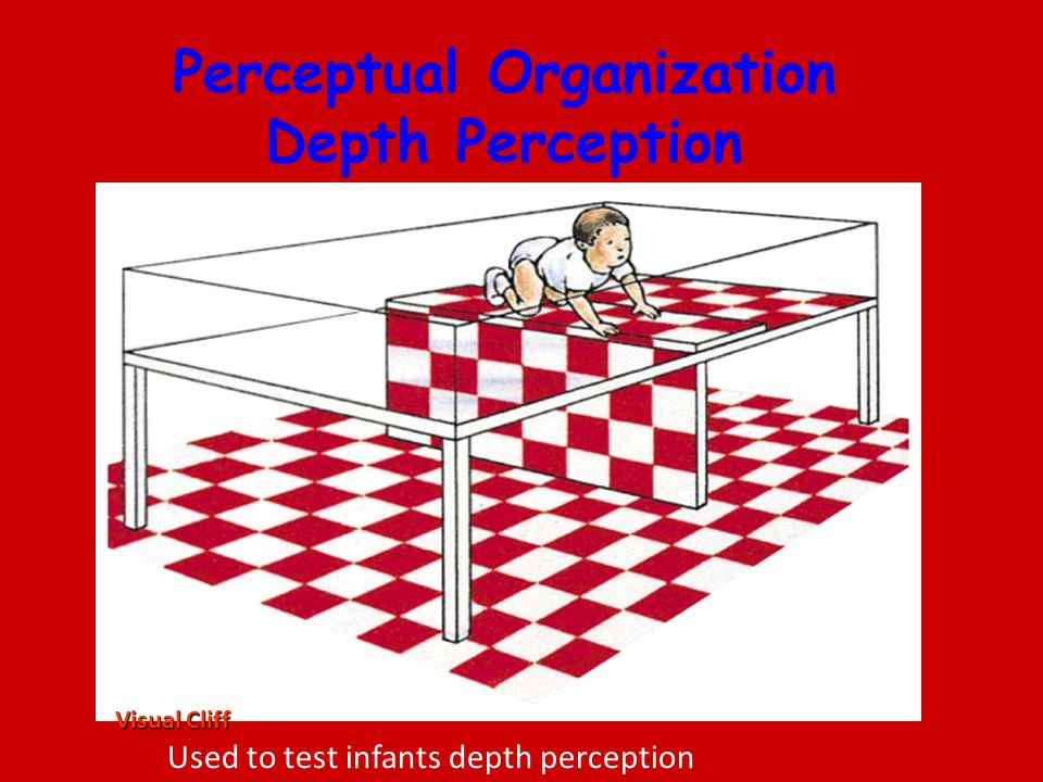 Perceptual Organization Depth Perception Visual Cliff Used to test infants depth perception