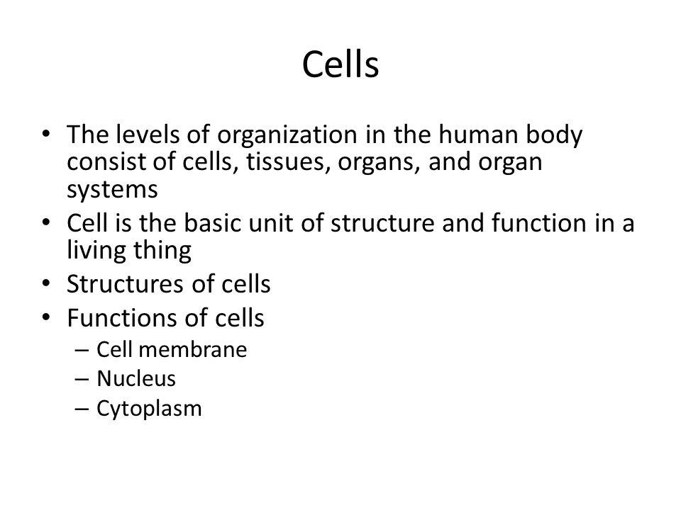 Tissues Tissue Muscle tissue Nervous tissue Connective tissue Epithelial tissue