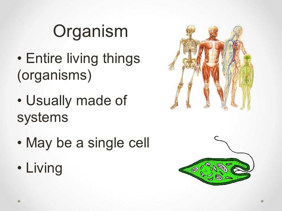 Organism Entire living things (organisms) Usually made of systems May be a single cell Living