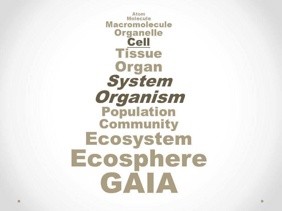 Atom Molecule Macromolecule Organelle Cell Tissue Organ System Organism Population Community Ecosystem Ecosphere GAIA