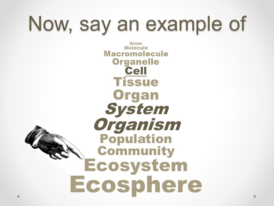 Atom Molecule Macromolecule Organelle Cell Tissue Organ System Organism Population Community Ecosystem Ecosphere Now, say an example of
