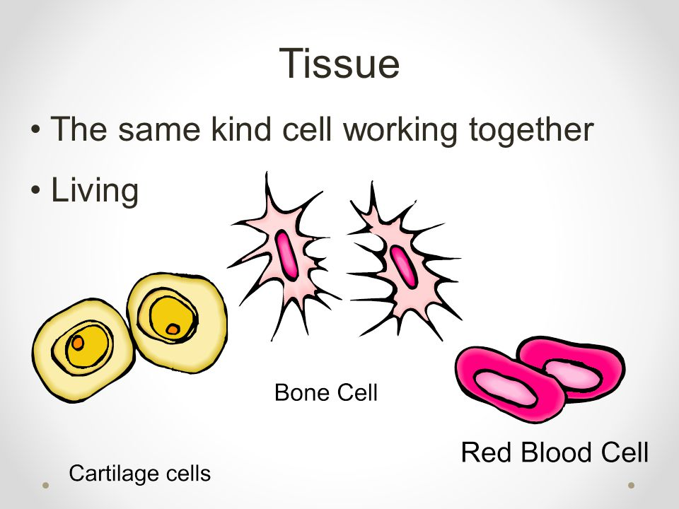 Tissue The same kind cell working together Living