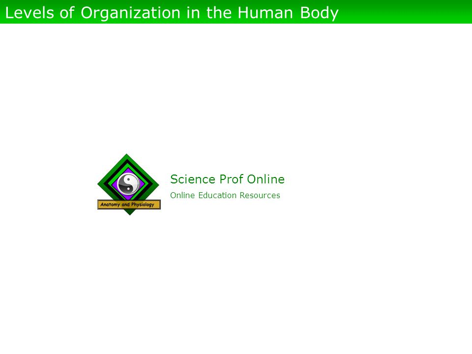 Science Prof Online Online Education Resources Levels of Organization in the Human Body