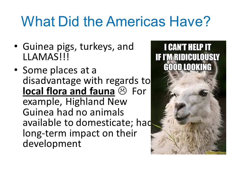 What Did the Americas Have? Guinea pigs, turkeys, and LLAMAS!!! Some places at a disadvantage with regards to local flora and fauna  For example, Hig