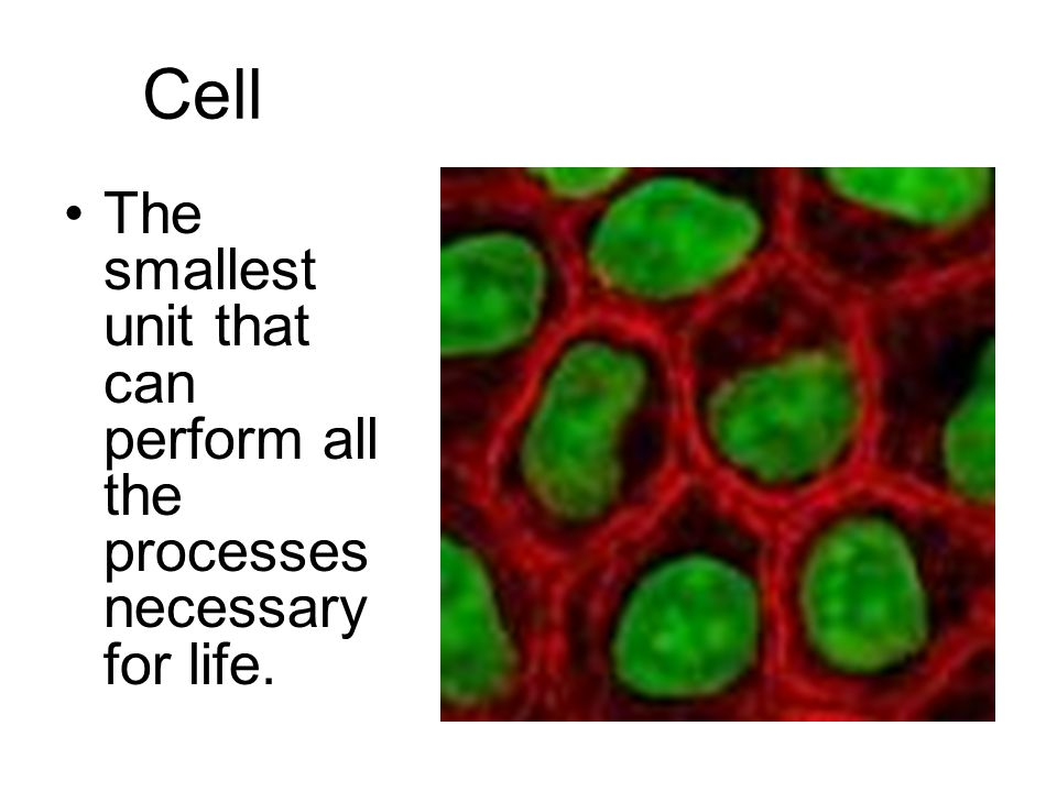 Cytoplasm The jelly-like fluid found inside of cells that the organelles float in.