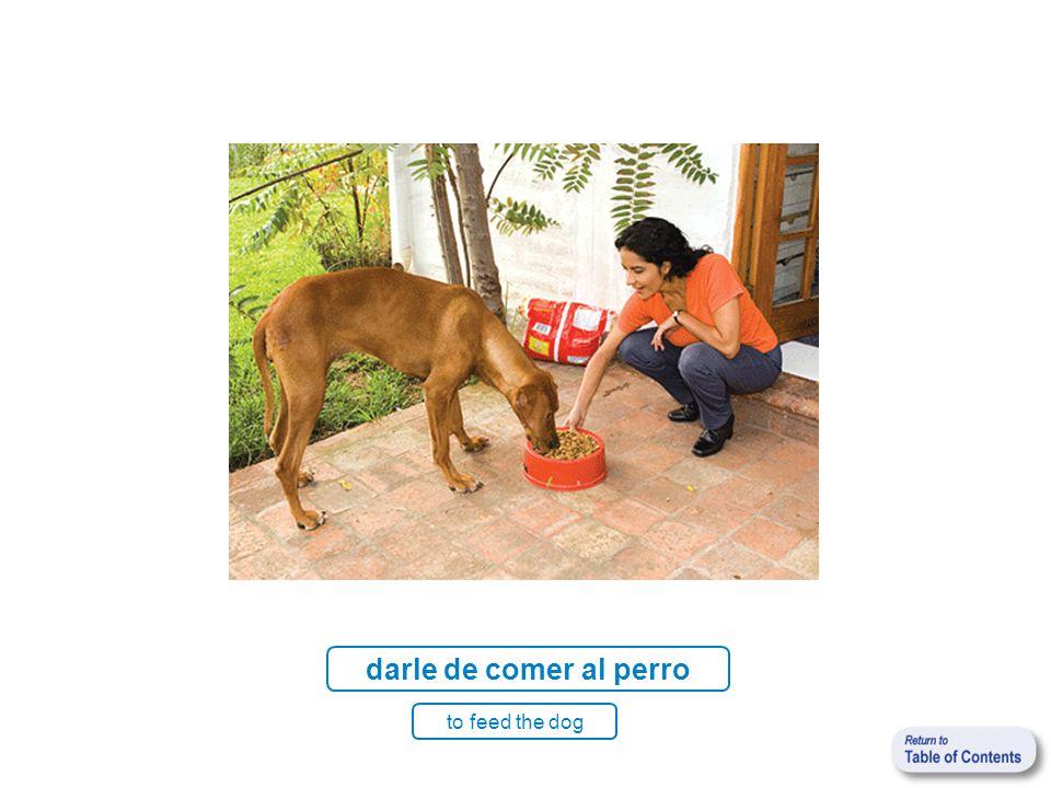 darle de comer al perro to feed the dog