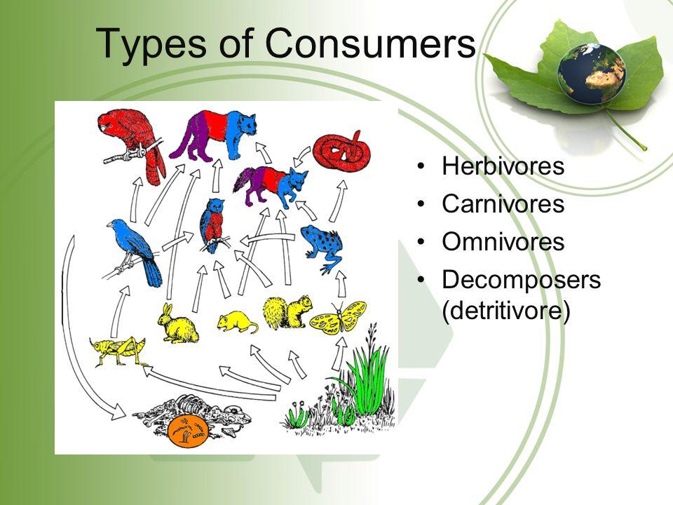 Types of Consumers Herbivores Carnivores Omnivores Decomposers (detritivore)
