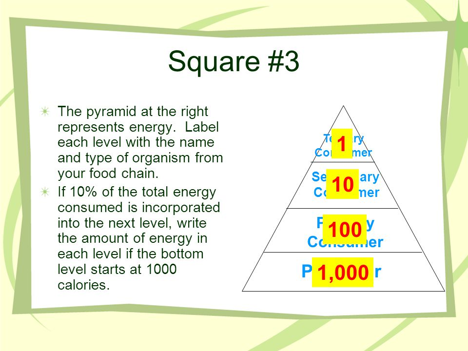 Square #3 The pyramid at the right represents energy. Label each level with the name and type of organism from your food chain. If 10% of the total en
