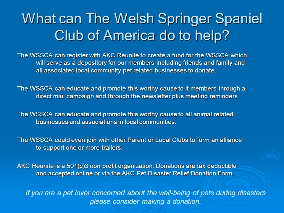 What can The Welsh Springer Spaniel Club of America do to help? The WSSCA can register with AKC Reunite to create a fund for the WSSCA which will serv