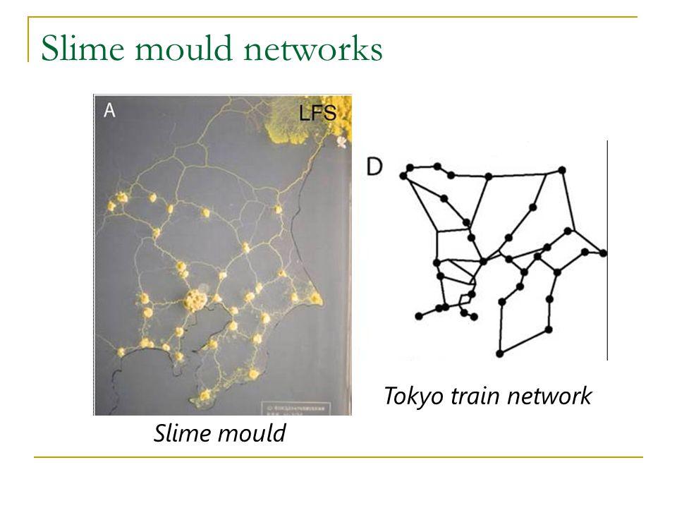 Slime mould networks Tokyo train network Slime mould