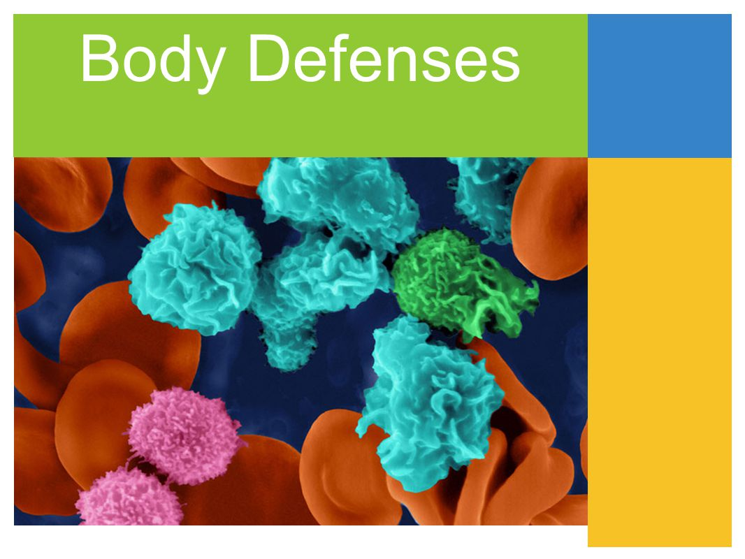B cells B-cells in general produce antibodies.