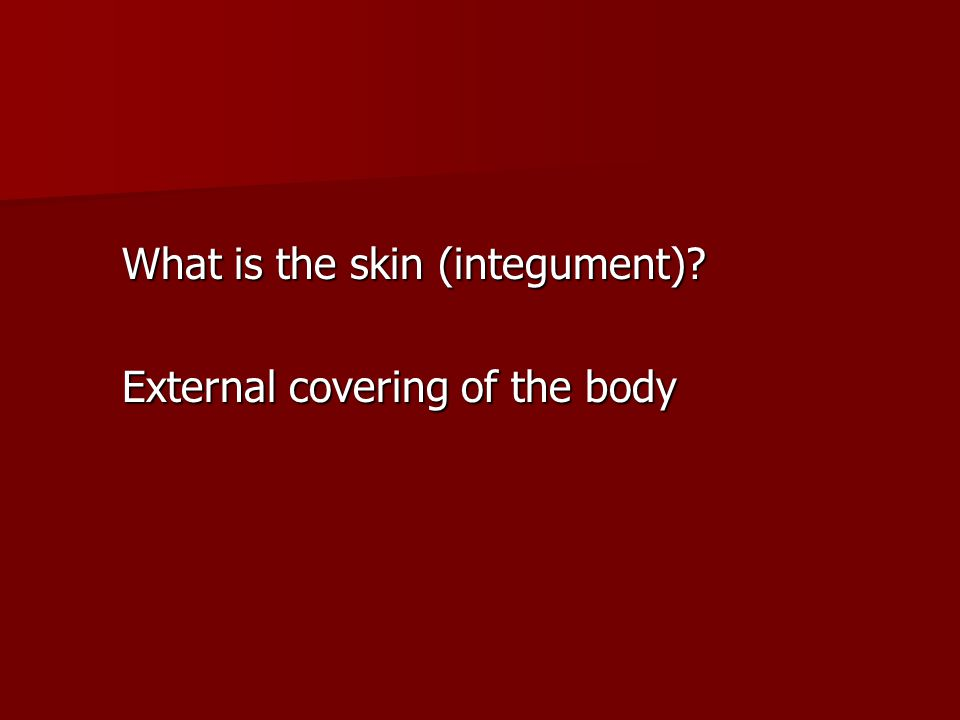 What is the skin (integument)? External covering of the body