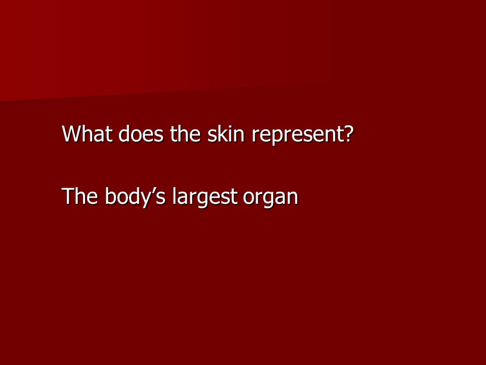 What does the skin represent? The body's largest organ