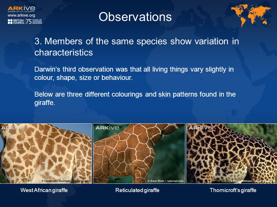 3. Members of the same species show variation in characteristics Darwin's third observation was that all living things vary slightly in colour, shape,