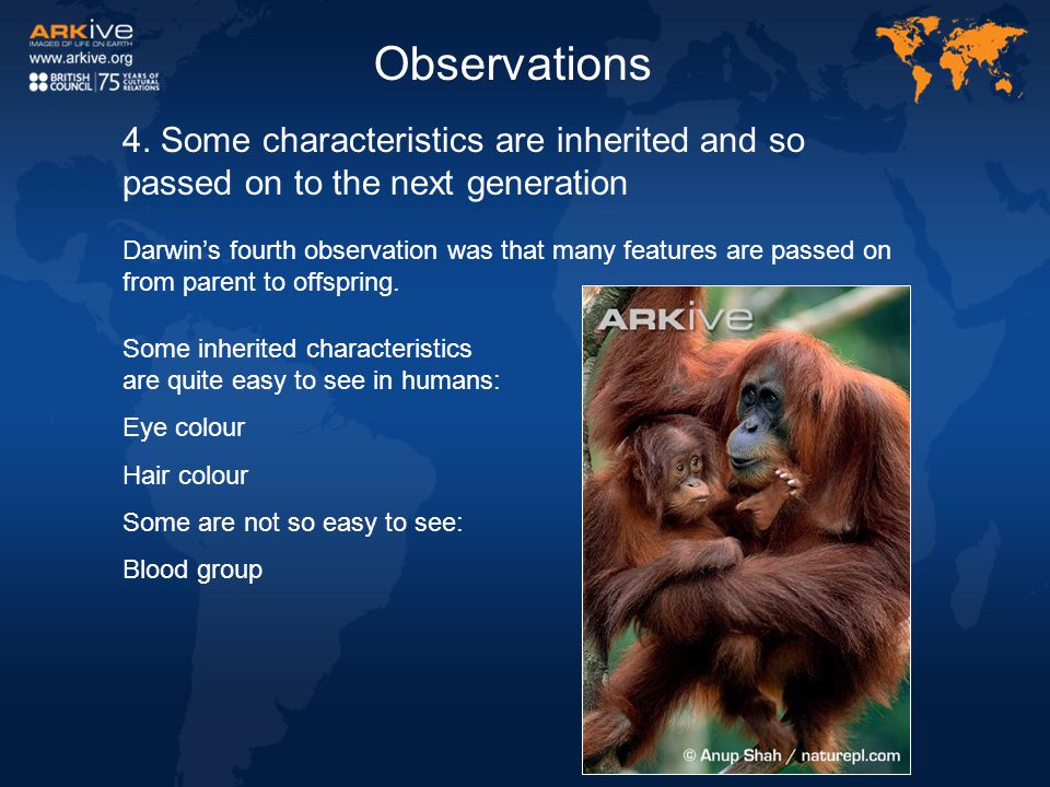 4. Some characteristics are inherited and so passed on to the next generation Darwin's fourth observation was that many features are passed on from pa