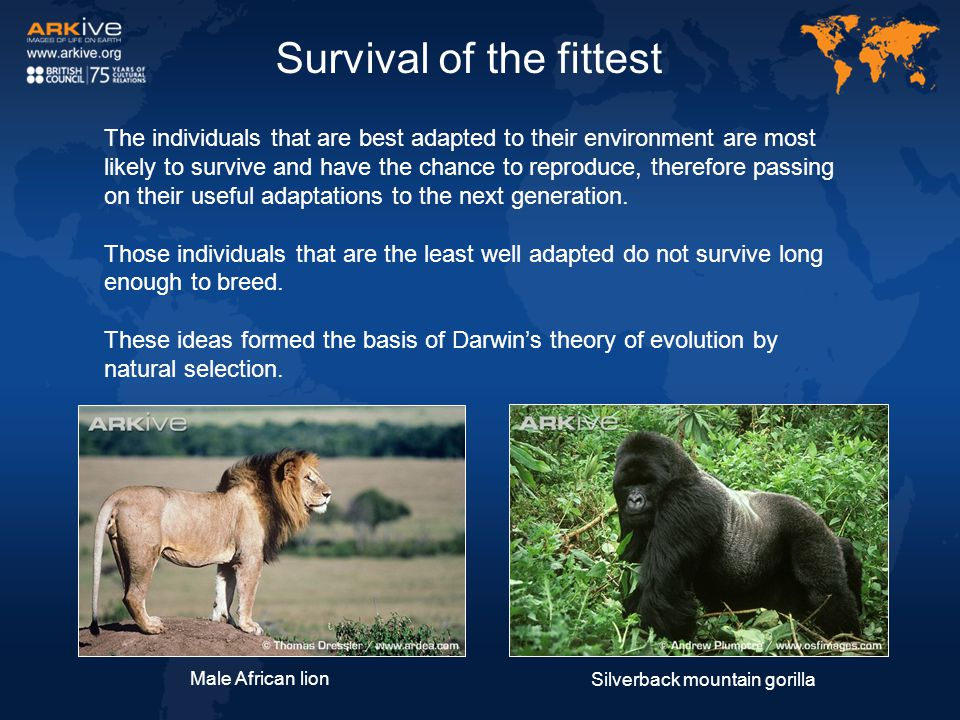 Survival of the fittest The individuals that are best adapted to their environment are most likely to survive and have the chance to reproduce, theref
