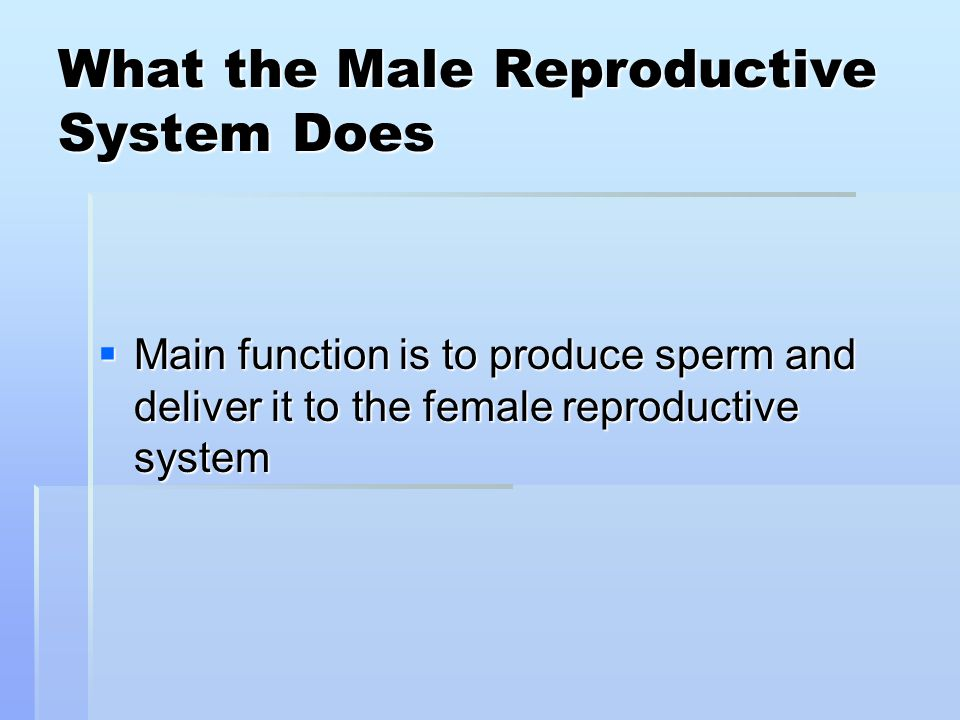 What the Male Reproductive System Does  Main function is to produce sperm and deliver it to the female reproductive system