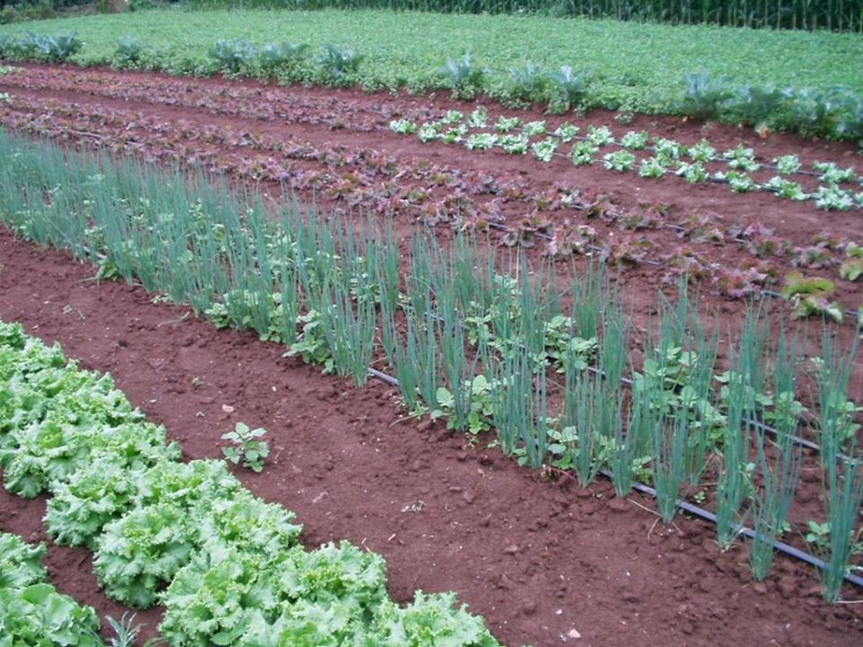 Crop Rotation on Organic Farms: a Planning Manual CH 1.