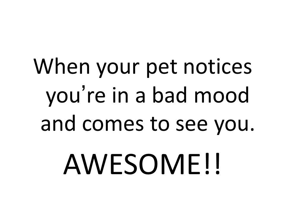When your pet notices you're in a bad mood and comes to see you. AWESOME!!