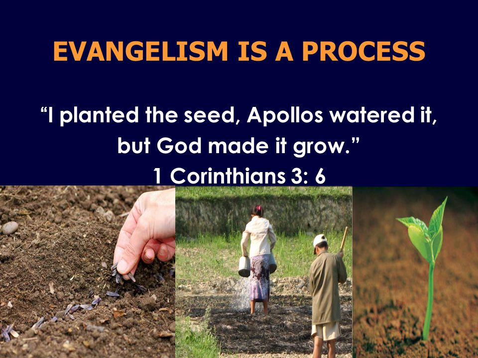 EVANGELISM IS A PROCESS I planted the seed, Apollos watered it, but God made it grow. 1 Corinthians 3: 6