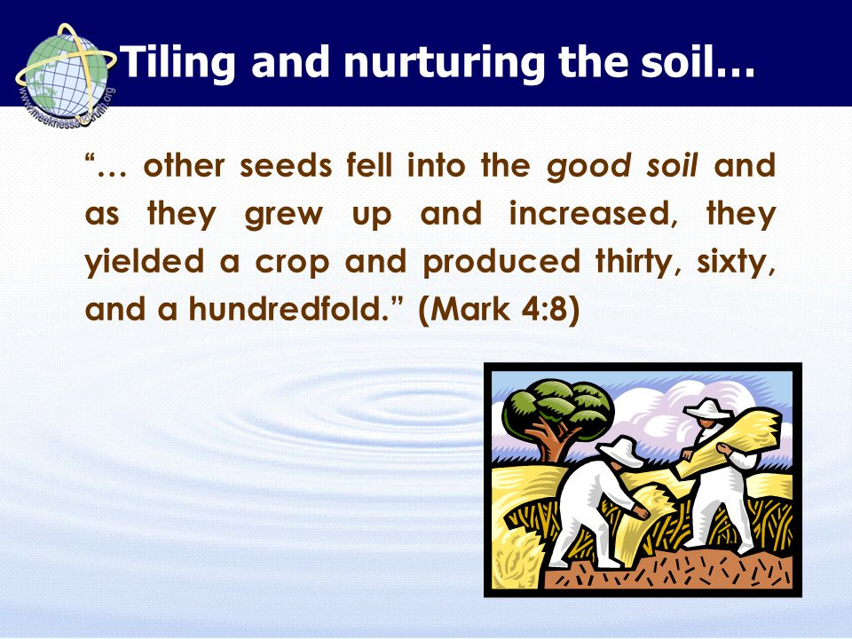 … other seeds fell into the good soil and as they grew up and increased, they yielded a crop and produced thirty, sixty, and a hundredfold. (Mark 4:8) Tiling and nurturing the soil…