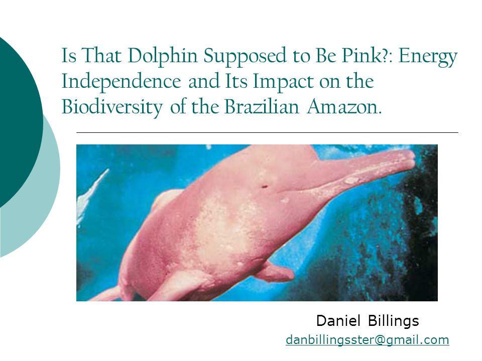 Is That Dolphin Supposed to Be Pink : Energy Independence and Its Impact on the Biodiversity of the Brazilian Amazon.