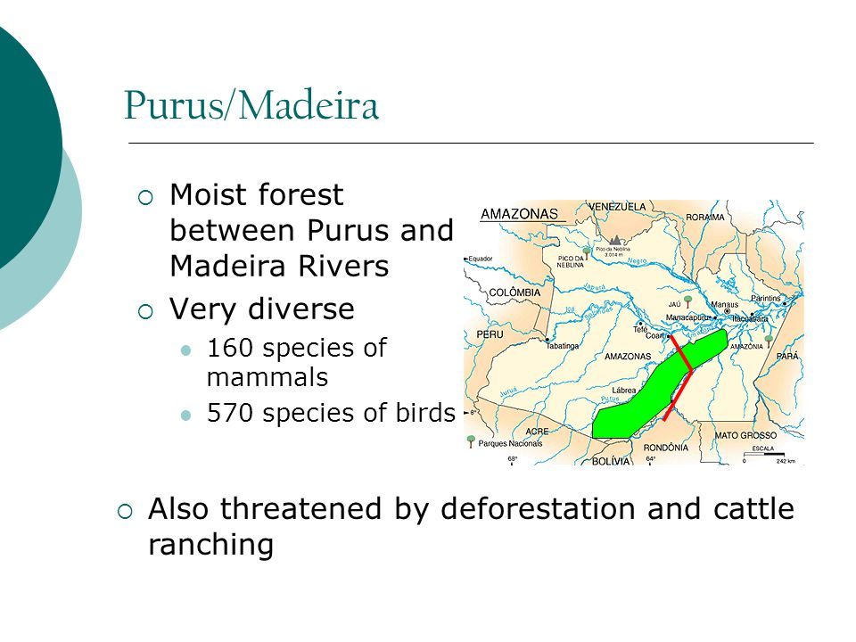 Purus/Madeira  Moist forest between Purus and Madeira Rivers  Very diverse 160 species of mammals 570 species of birds  Also threatened by deforestation and cattle ranching