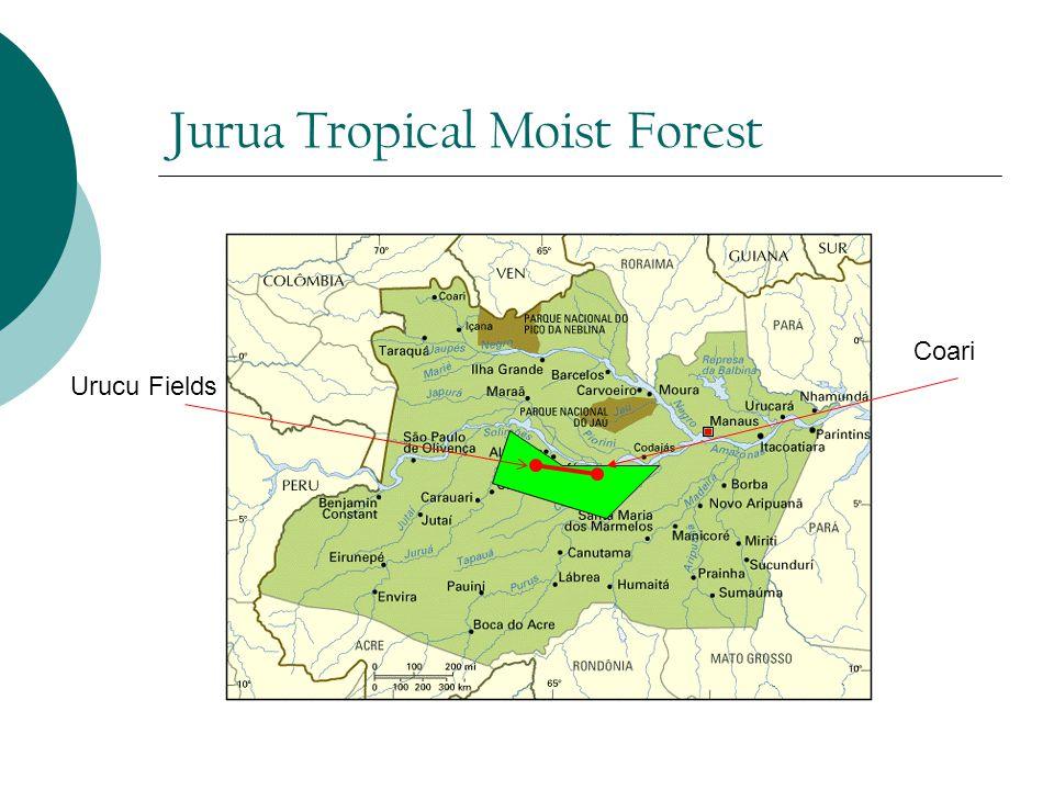 Jurua Tropical Moist Forest Urucu Fields Coari