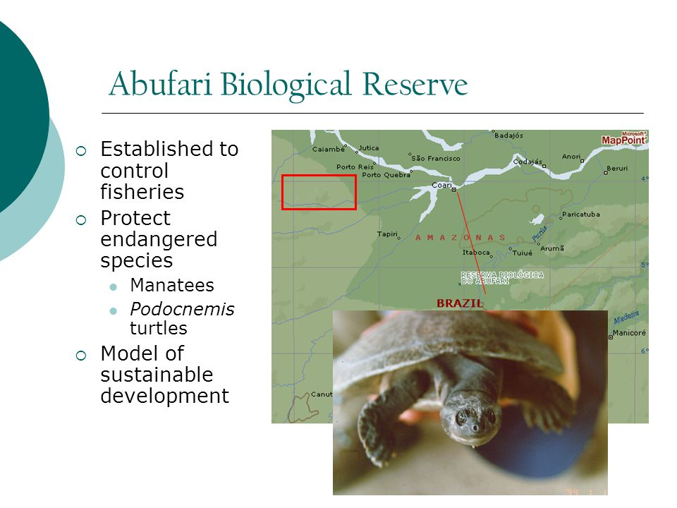 Abufari Biological Reserve  Established to control fisheries  Protect endangered species Manatees Podocnemis turtles  Model of sustainable development