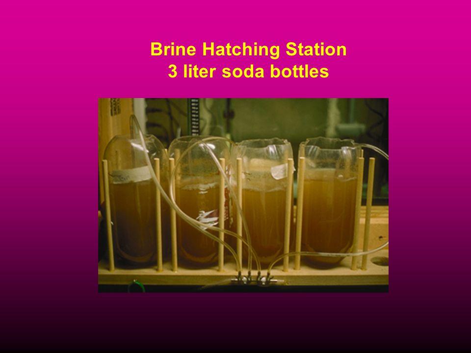 Brine Hatching Station 3 liter soda bottles