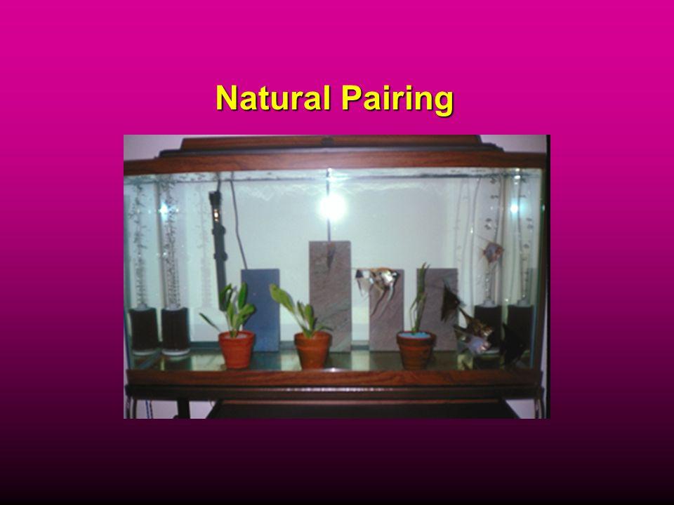 Natural Pairing